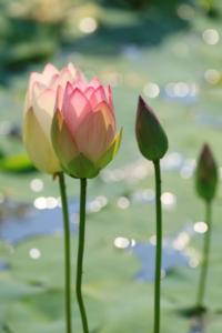 ffis-202011-第14回「花の会福岡」写真展